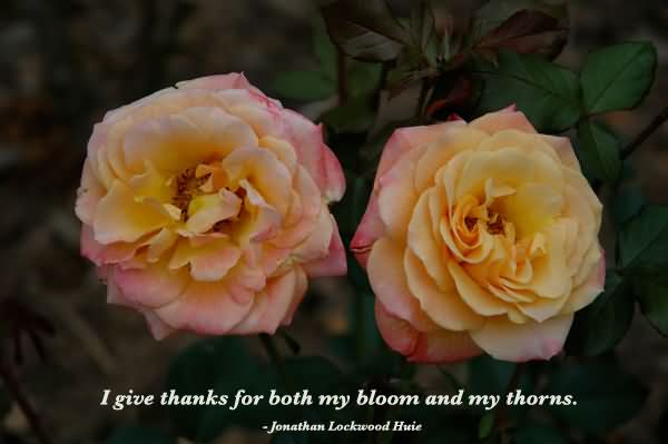 i-give-thanks-for-both-my-bloom-and-my-throns