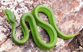 Mơ thấy rắn đánh con bao nhiêu trong xổ số miền bắc