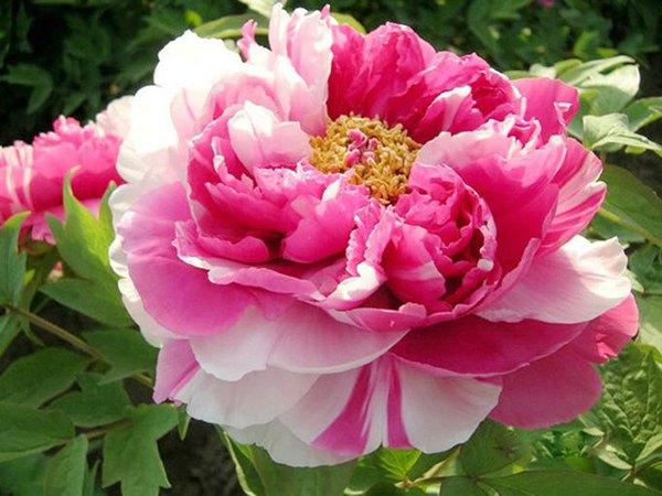 Mơ thấy hoa là điềm báo điều gì?