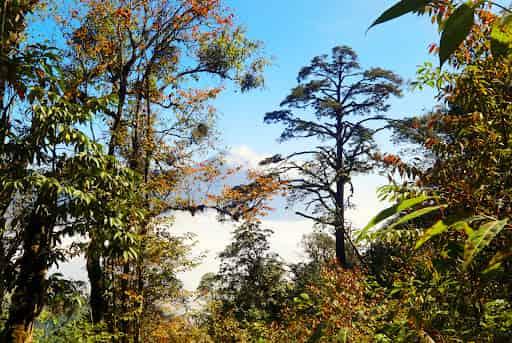 Mơ thấy rừng điềm báo gì lành hay dữ, đánh số gì chắc trúng